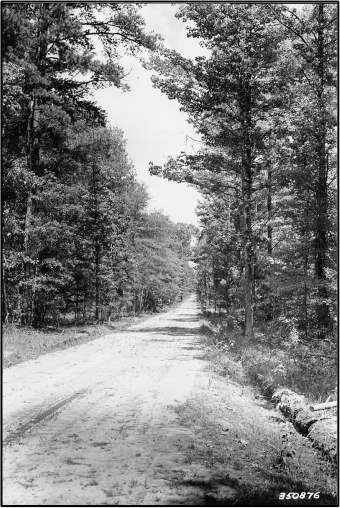 Crossett Experimental Forest road in 1937