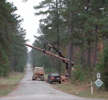 Crossett Experimental Forest road in 2004