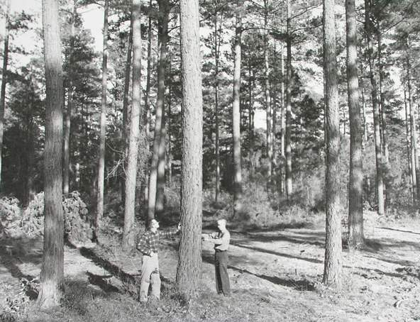 Crossett Experimental Forest in 1962